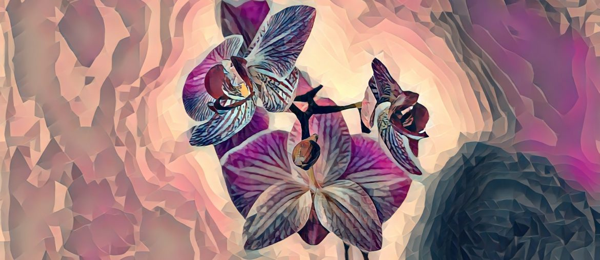 Can you put orchids in your bedroom?, Zazzy Home