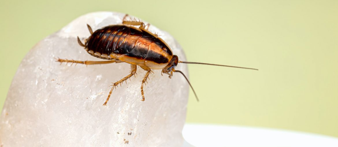 How do I prevent cockroaches in my bedroom?, Zazzy Home