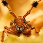 How to get rid of spider beetles in the bedroom