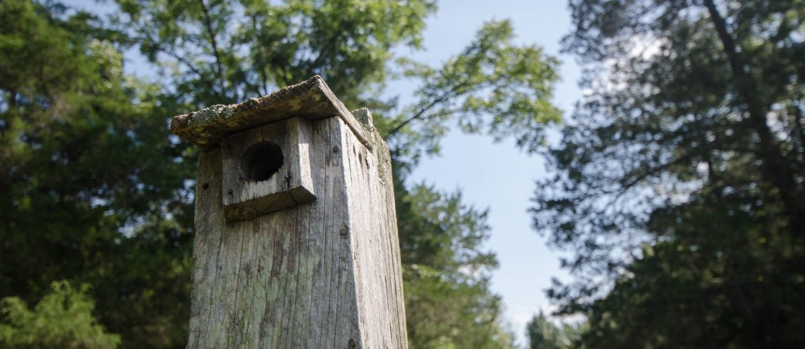 Tips for Placing Bird Nesting Boxes: Where to Place Them and Who Should Install Them, Zazzy Home