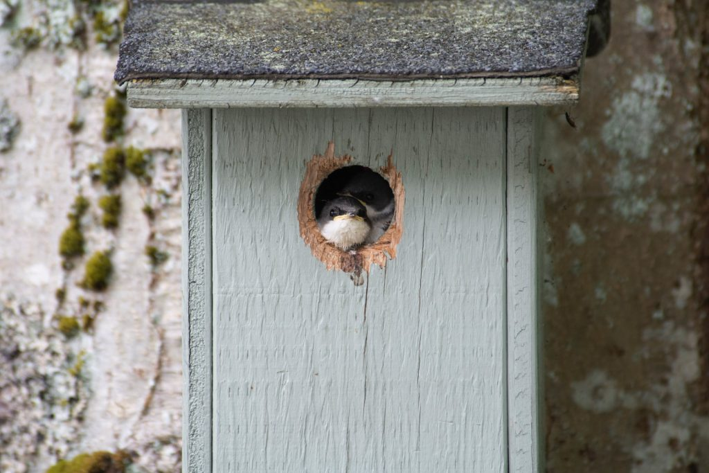 Six essential tips for nesting box care, Zazzy Home