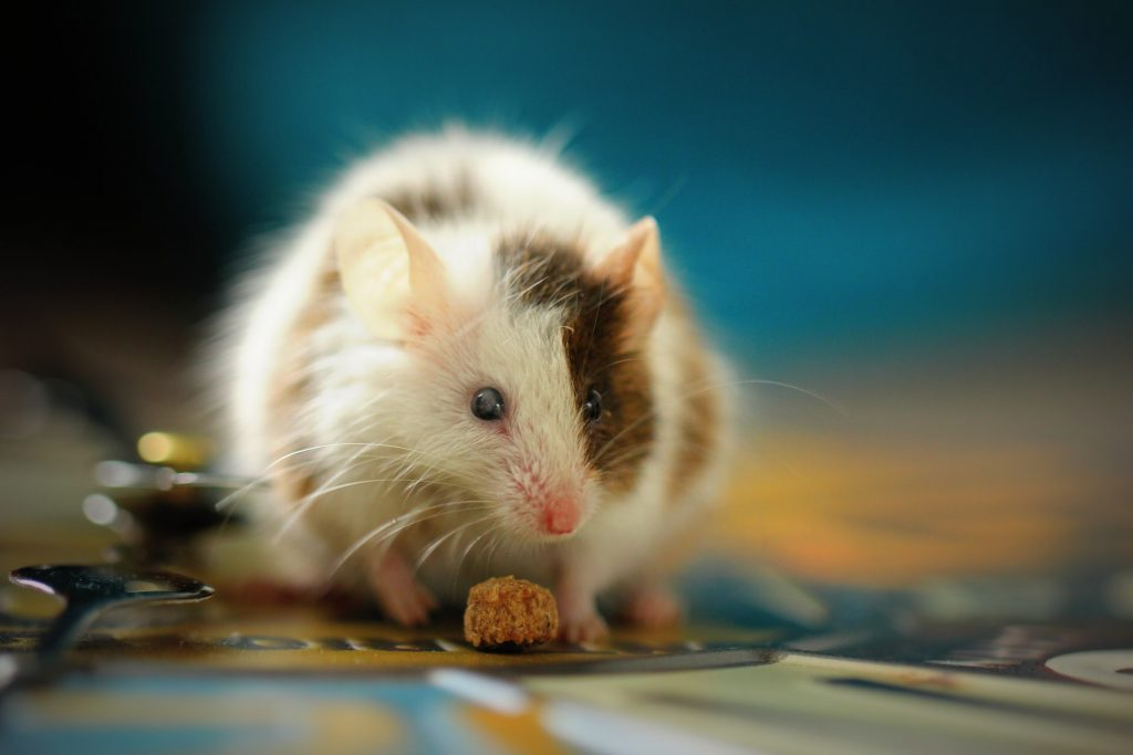 How to keep mice out of your bedroom, Zazzy Home