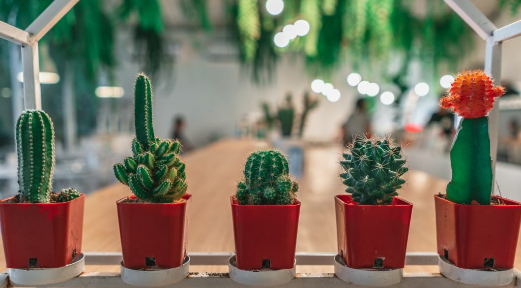 Can i put a cactus in my bedroom, Zazzy Home