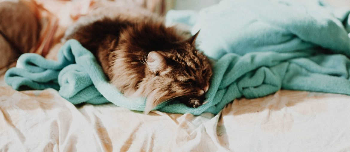 How to Make Faux Fur Blanket Soft Again, Zazzy Home