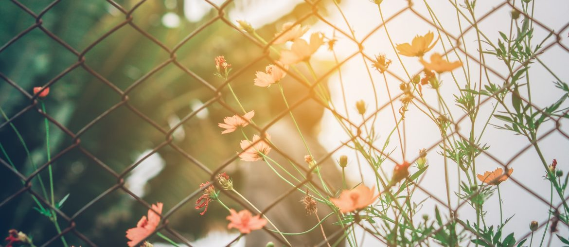 How to paint a chain link fence, Zazzy Home